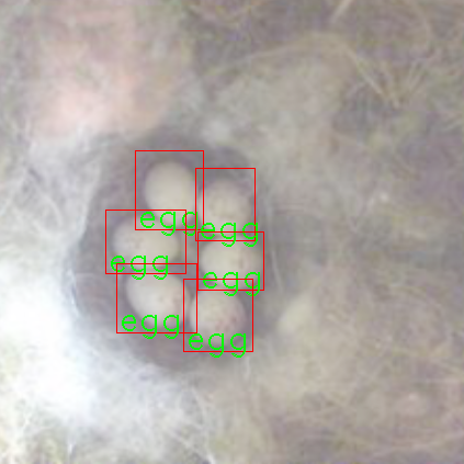 Egg detection example